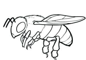 desenho abelha para colorir