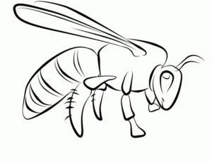desenho de abelha de verdade