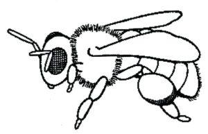 imagem de abelha colorir